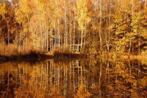gamta,medžio ruduo,rudens nuotaika,ruda,saulė,medžiai,kraštovaizdis,aukso ruduo,miškas,kritimo spalva,lapai,rudens šviesa,šviesa,kritimo lapija,rudens spalvos,veidrodis,vanduo,ruduo,rudens miškas,ežero vaizdas,rudens rudens,atsiras
