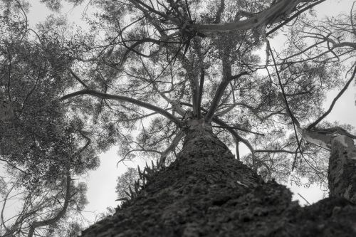 gamta,medis,bagažinė,kraštovaizdis