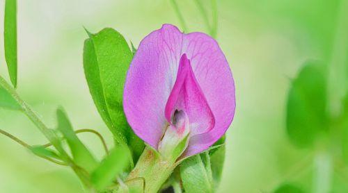 gamta,gėlė,oranžinė,gėlės,raudona,augalai,sodas,makro,violetinė,kraštovaizdis,lazda,vabzdys,skraidantys vabzdžiai,sparnai,libelulido,libellulidae,skraidantis vabzdys,grožis,mėlyna lazdele,filialas,vanduo,upė,Tyras vanduo,natūralus vanduo,kristalinis,skaidrus vanduo,šaltinis,burbuliukai,užtvankos,aiškumas,upelis,skaidrus vanduo,Grynumas,reaktyvinis,gėlas vanduo,kristalinis vanduo,jūra,srautas