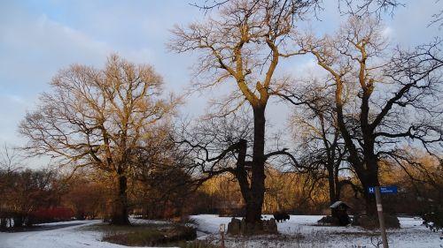 gamta,medžiai,kraštovaizdis,seni medžiai,žiemos medžiai,zoologijos sodas,sezonai