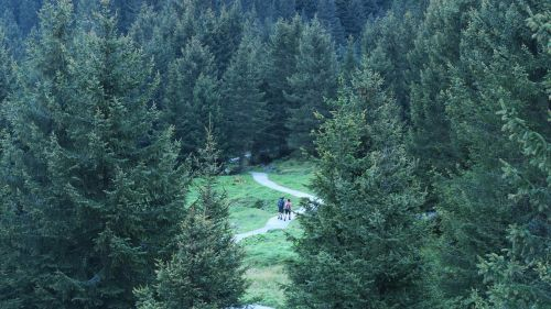 gamta,žalias,miškas,miškai,kelionė,nuotykis,takas,kelionė,alpinistas,kalnas,stovykla,kelionė