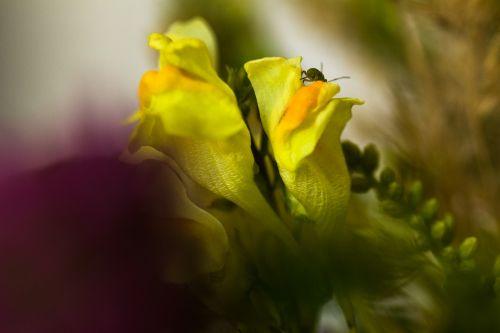 gamta,gėlė,žiedas,žydėti,puokštė,laukinė gėlė,sodas,gėlės,flora,augalas,gėlių ragas,graži gėlė,pasveikinimas,sveikinimai,aphid,vabzdys