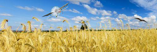 gamta,kraštovaizdis,vasara,kvieciai,rugių laukas,orlaivis,skristi,dangus,debesys,paukštis,falcon,šunys,propeleris,reklama,antraštė