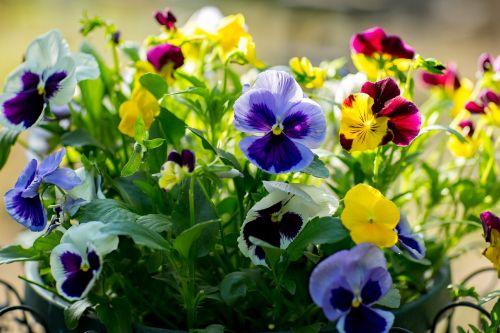 gamta,gėlė,flora,augalas,botanika,sodas