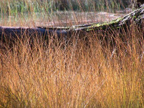 gamta,žolės,struktūros,ochra