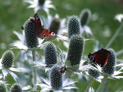 gamta,vabzdžiai