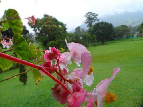gamta,gėlės,pl,flora,augalai,sodas,maža gėlė,makro,kraštovaizdis,gėlės,alyvos