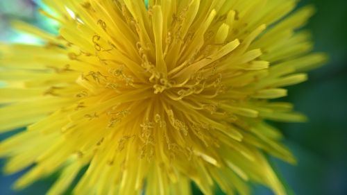 gamta,gėlė,sodas,geltona gėlė,gėlės,graži gėlė,gamtos gėlė,laukinė gėlė