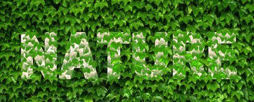 gamta,ivy vynmedis,lapai,žalias,augalas,padengtas,šrifto