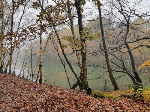 gamta,medžiai,miškas,kraštovaizdis,vanduo,mirę medžiai,aplinka,koplyčios,Antverpenas,Belgija,atkurta