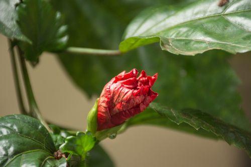 gamta,lapai,augalas,metodas,sodas,spalva,paragvajus,raudona,šviežumas,gėlių,gėlė,gražus,natūralus,drėgna,medis,žydėjimas