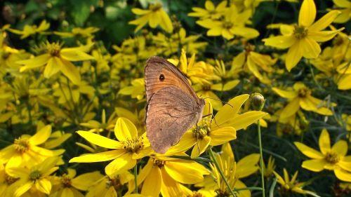 gamta,gėlė,drugelis,vabzdys,vasara,sodas,augalas,Iš arti
