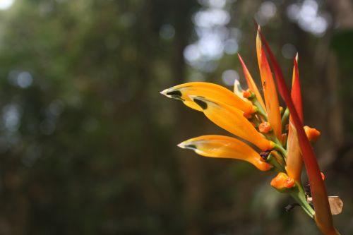 gamta,po atviru dangumi,gėlė,augalas