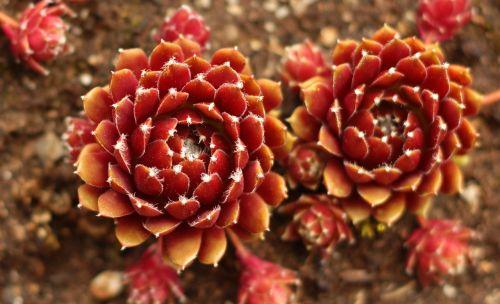 gamta,spalva,flora