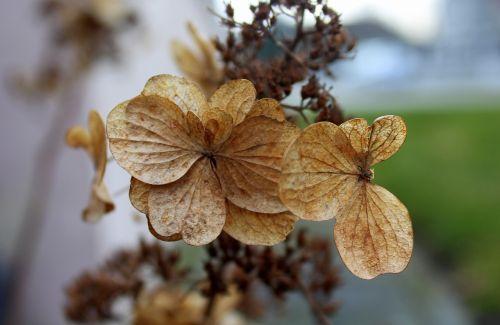gamta,augalas,lapai,Iš arti,sezonas,teismo posėdyje,gėlė