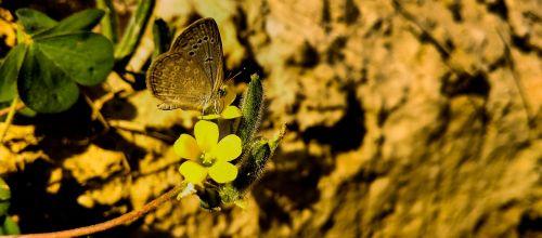 gamta, lauke, gėlė, lapai, flora, spalva, vasara, stalinis kompiuteris, modelis, gražus, sezonas, šviesus, Iš arti, mediena, aplinka, medis, gėlių, mažai, drugelis, drugelis ant gėlių, be honoraro mokesčio