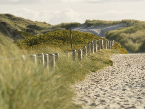 gamta, kraštovaizdis, dangus, kelionė, žolė, kopos, kopos, smėlis, jūra, sylt, žole pieva, žolės, augalas, pieva, žalias, šventė, panorama, žalia žolė, atostogos, žaislinė žolė, jūrų, pavasaris, be honoraro mokesčio