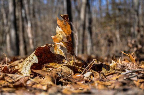 gamta, mediena, kritimas, medis, lauke, lapai, aplinka, parkas, gražus, be honoraro mokesčio