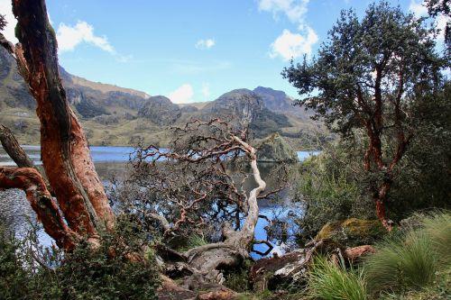 gamta, kraštovaizdis, medis, kelionė, dangus, kalnas, polylepis, andes, miškas, žygiai, ežeras, be honoraro mokesčio