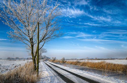 gamta, medis, kraštovaizdis, žiema, sezonas, ledinis, ledinis, be honoraro mokesčio