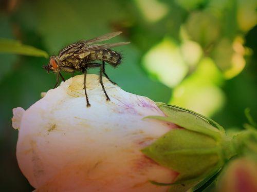gamta, vabzdys, gėlė, Uždaryti, sodas, skristi, gyvūnas, makro, makrofotografija, be honoraro mokesčio