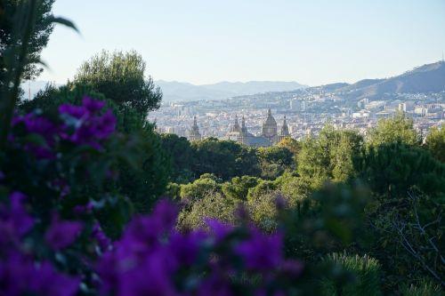 gamta, kraštovaizdis, medis, vasara, dangus, barcelona, Ispanija, augalas, švarus dangus, mėlynas dangus, architektūra, pastatas, vista, be honoraro mokesčio