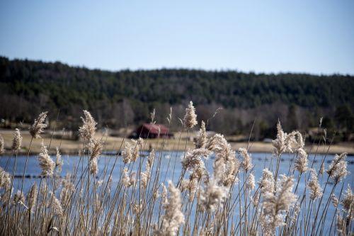 gamta, Vandens telkinys, lauke, jūra, niekas, kaimas, nendrė, tvartas, Himmel, pakrantės, papludimys, be honoraro mokesčio