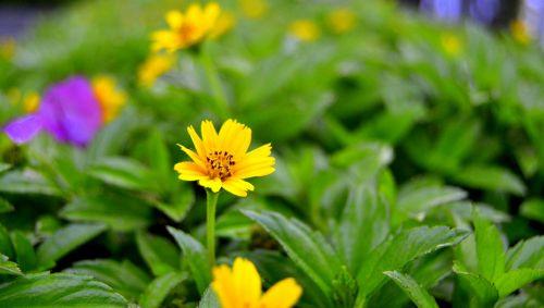 gamta, lapai, flora, vasara, gėlė, sodas, šviesus, žolė, spalva, sezonas, laukas, Hayfield, šviežumas, gyvas, aplinka, žydi, be honoraro mokesčio