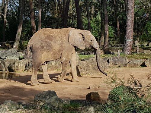 pobūdį, gyvūnija, žinduolis, dramblys