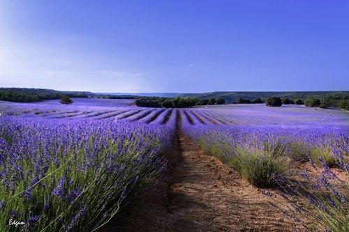 pobūdį, kraštovaizdis, po atviru dangumi, gėlė