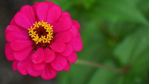 pobūdį, gėlė, vasara, augalų, Sodas, žiedlapiai, gražus, gyvena, spalva, lapai, lauko, žydi, Dabartinis sezono, parkas, žiedadulkės