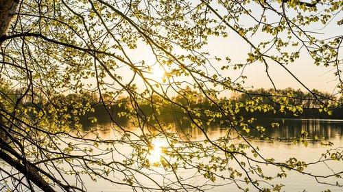 pobūdį, medis, lapai, pavasaris, fonas, saulė, saulėlydžio, ap, gražus, ežeras, vandens, abendstimmung, nuotaika