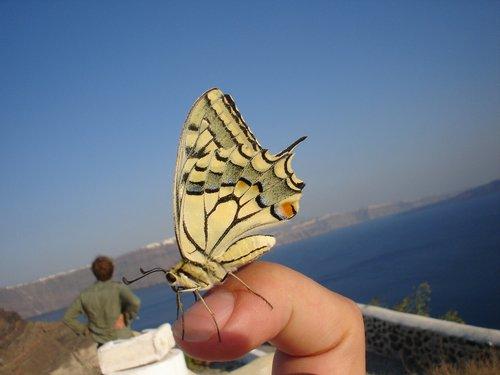 pobūdį, vasara, dangus, drugelis, vabzdys, Iš arti