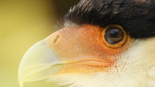 pobūdį, gyvūnija, akis