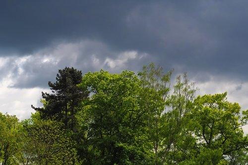 pobūdį, medžiai, kraštovaizdis, debesis, dangus, dengta dangus, tamsūs debesys, dramos, dramatiškas dangus, Orai nuotaika, Dramatiški debesys, atmosfera, lietaus debesys, audra, audra, gewitterstimmung, grasina, Orų, tamsus dangus, dramatiškas, nuotaika