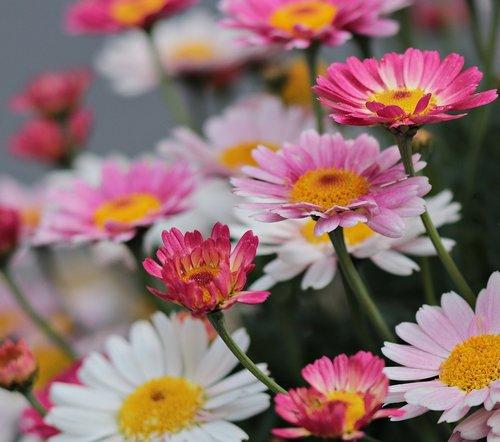 pobūdį, augalų, gėlės, vasara, gėlių, Saulutės, fonas, spalvinga, spalva, spalvingos gėlės, farbenpracht, spalvinga įvairovė, įvairovę, gražus, vasaros gėlės, Gėlių pieva, vasaros pieva