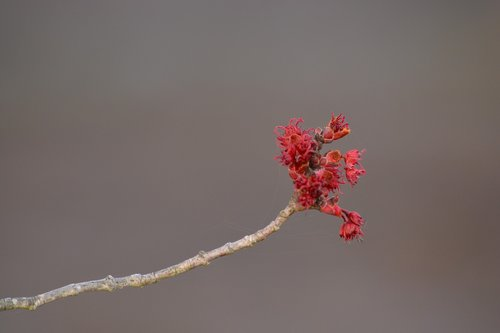 pobūdį, filialas, gėlė, medis, Žiemos, floros, sezonas, augimas, lauke, pavasaris, BUD, augti, stiebas, žiedas, augalų, žydėjimas