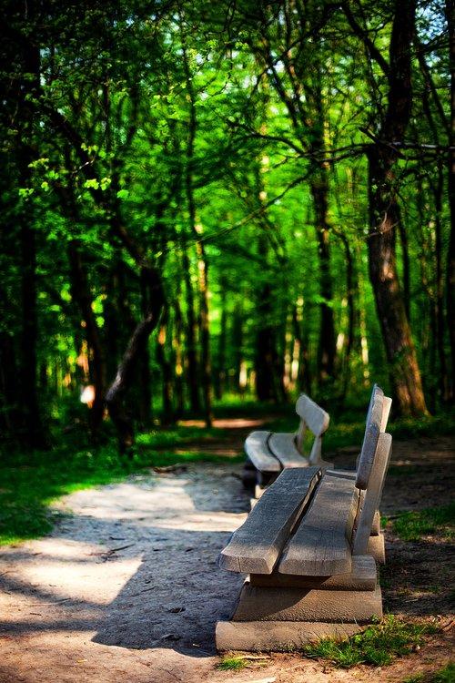 pobūdį, parkas, miškas, atsipalaidavimas, miško kelias, takas, medžiai, bankas, parko suoliukas, sodo suoliukas, medinis stende