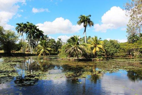 pobūdį, vandens, ežeras, kraštovaizdis, Kuba, dangus, debesis, rojus, palmės, saulė