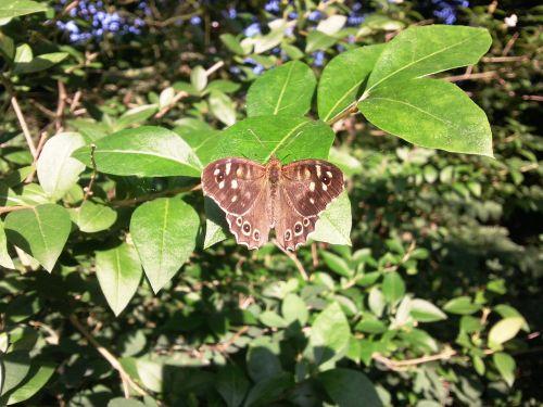 gamta,gyvūnai,drugelis,miško stalo žaidimas