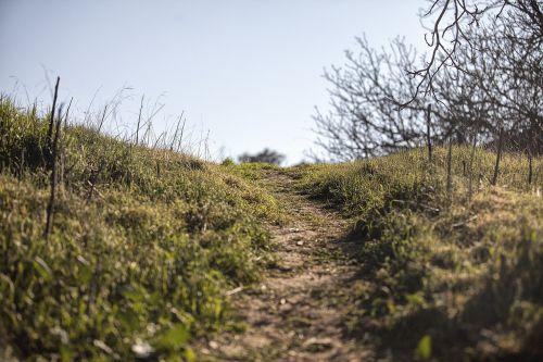 gamta,kelias,vaikščioti,kraštovaizdis,žalias,lauke,natūralus,vasara,parkas,gamtos kraštovaizdis,saulė,saulės šviesa,vasaros kraštovaizdis,aplinka,kelias,vaizdingas,diena,saulėtas,scena,gamtos fonai,kelias,žemas,kampas,žolė