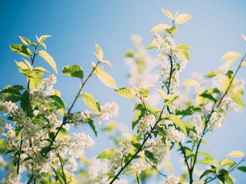 gamta,žalias,balta,gėlė,vasara,pavasaris,aplinka,natūralus,augalas,šviesa,šviesus,sezonas,žalia fone,šviežias,gamtos fonas,sodas,spalva,natūralus fonas,saulėtas,saulės šviesa,šviežumas,vasaros fone,vasaros kraštovaizdis,medžių sodinimas,medis,žolė,žali lapai,žalias lapas,miško peizažas