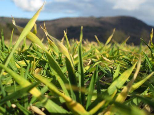 gamta,žolė,natūralus fonas,žalias,natūralus,žalia fone,žalia fone,lauke,žalias laukas,žalia žolė,augimas,spalva,saulės šviesa