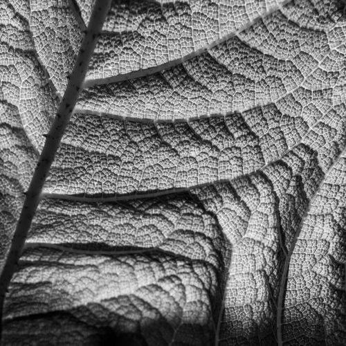 gamta,struktūra,lapai,tekstūra,paviršius,struktūros,augalas,abstraktus,sodas,piešimas