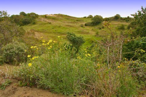 gamtos rezervatas,brecca,kalnas,kopos,stepė,žolės kraštovaizdis,vasara,kalvos,laisvė,šventė,gėlės,smėlis,bushland