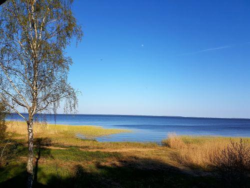 neringa,kurriu marios,sping,kraštovaizdis,medis,natūralus,aplinka,saulėtas,žalias,diena,gamta,horizontas,saulė,laukas,idiliškas,pavasaris,miškas,dangus
