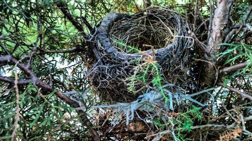 lizdas,paukštis,Paukščių lizdas,medis,filialas,motina,laukinė gamta