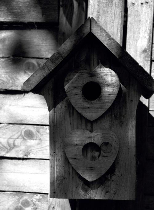 lizdas,sodas,paukščiai,lizdas,kajutė,mediena,gyvūnas,robin,vadybininkas