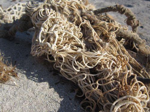 tinklas,žvejybos tinklas,papludimys,smėlis,flotsam,Uždaryti,natūralūs pluoštai,gamtos tinklas,grobmaschig,prarastas,plauti krante
