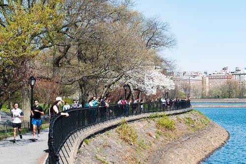 Niujorkas, centrinis parkas, pavasaris, medis, kraštovaizdis, pobūdį, vandens, parkas